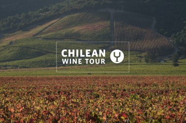 Chilean Wine Tour