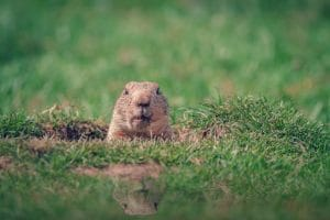 Is It Groundhog Day All Over Again for the Shutdowns?